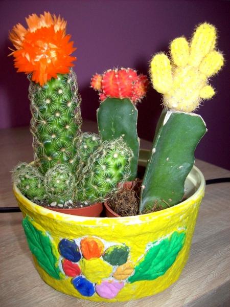 Ozdobna Doniczka Na Kaktusy Czas Dzieci